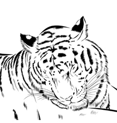 Tiger scetch hand drawn on background vector