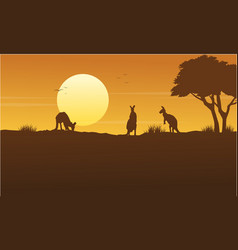Kangaroo scenery on park silhouettes vector