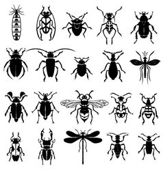 Insects set vector