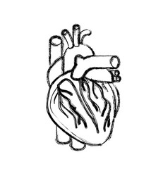 Blurred realistic silhouette heart system human vector