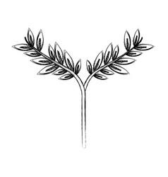 branch leaves floral decoraton laurel plant vector image vector image
