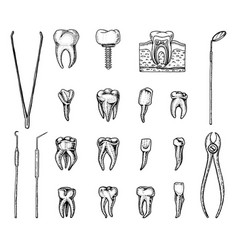 Molar teeth enamel dental set instruments vector