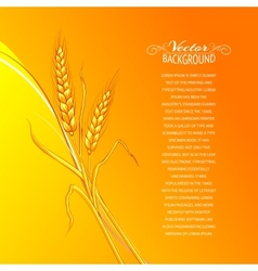 Ears of wheat on orange background vector