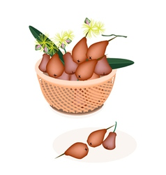 A Brown Basket of Red Water Apple vector image