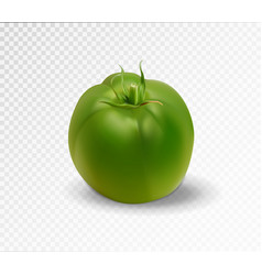 Green realistic isolated tomato 3d tomato vector