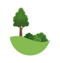 Tree landscaping bush environment plant image vector