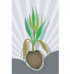 Coconut plant vector