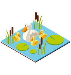 3d design for pond scene with ducks vector image vector image