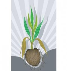 coconut plant vector image