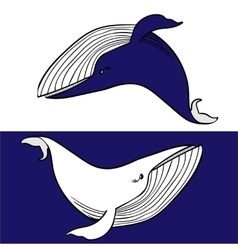 Couple of Whales vector image
