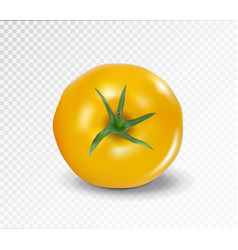Tomato top side realistic yellow tomato vector