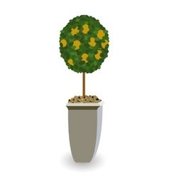 Home green plant in nice pot vector