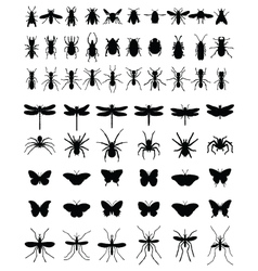 Insects 2 vector