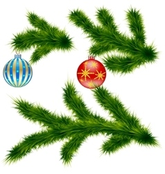 Green pine branches vector image