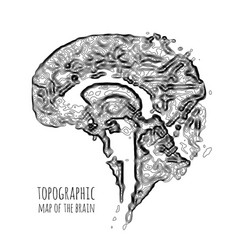 The brain in the form of a topographic map the vector