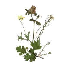 Herbarium with dry pressed green summer meadow vector