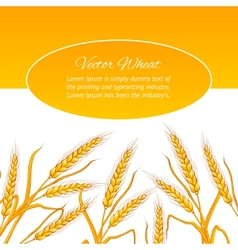 Wheat ear card vector