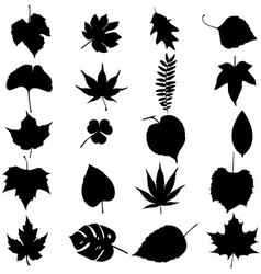 Leafs set vector