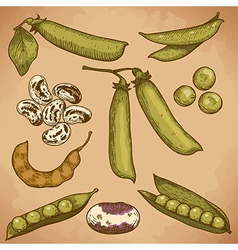 Engraving beans and peas retro vector