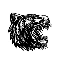 Growling tiger woodcut black and white vector