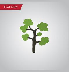 Isolated evergreen flat icon garden vector