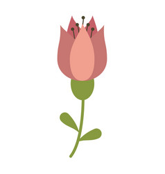 tulip flower decoration image vector image
