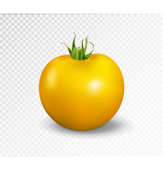 Yellow tomato realistic vector