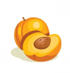 nectarine vector image vector image