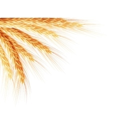 Golden wheat ear after the harvest eps 10 vector