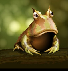 Amazon horned frog vector