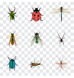 Realistic housefly damselfly ladybird and other vector