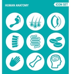 set of round icons white Human anatomy leg hair vector image vector image