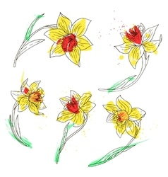 Set of daffodils vector