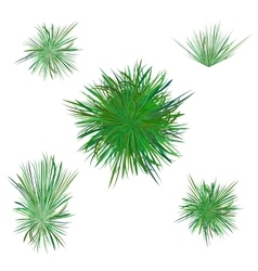 Spring green grass vector