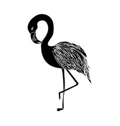 contour beauty and exotic flamingo bird animal vector image