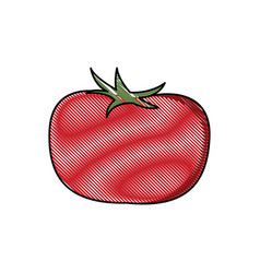 draw tomato vegetable nutrition vitamin food vector image vector image
