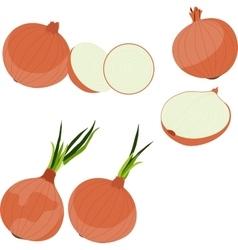 Set of onion vector