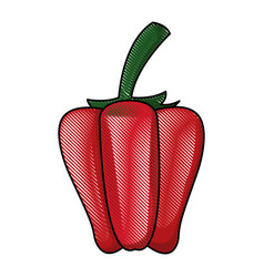 draw pepper vegetable nutrition vitamin food vector image vector image