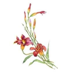 Summer watercolor garden blooming flowers isolated vector