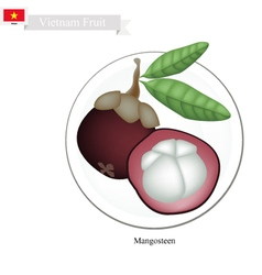 Purple mangosteens a famous fruit in vietnam vector