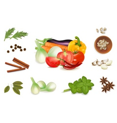 group of spices vector image