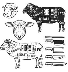 Lamb cuts butcher diagram design element for vector
