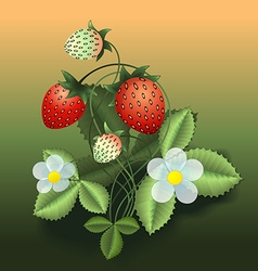 Strawberry bush vector
