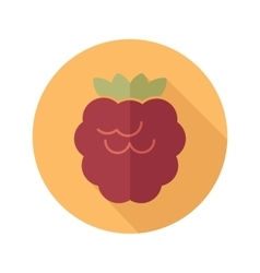 Raspberry flat icon with long shadow vector image