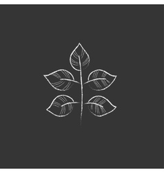Branch with leaves drawn in chalk icon vector