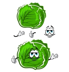 Green cabbage cartoon character with thumb up vector