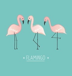 pink flamingo vector image