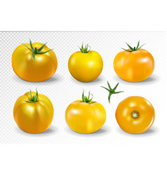 Tomato set yellow tomato photo-realistic vector