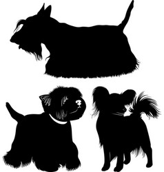 dogs vector image vector image