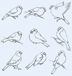 little tits sparrows and bullfinches vector image